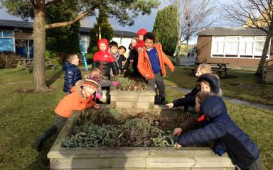 Year 1 'hunt' for plants!