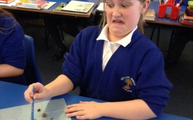 Year 5 investigate something rather smelly – Viking Poo!